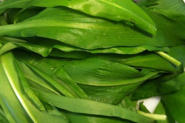 Cozinhar com Folhas de alho Selvagem